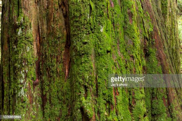 tree bark texture - moss stock pictures, royalty-free photos & images