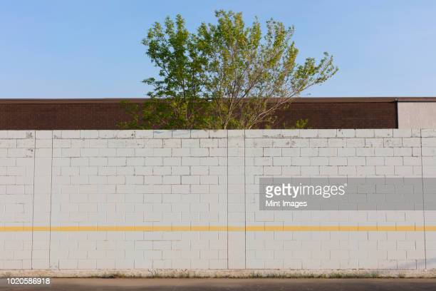 tree behind playground wall and building - brick wall stock pictures, royalty-free photos & images