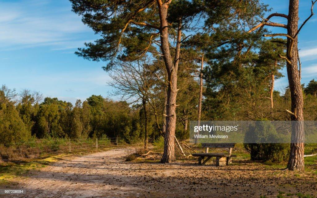 Tree Bench : Foto de stock