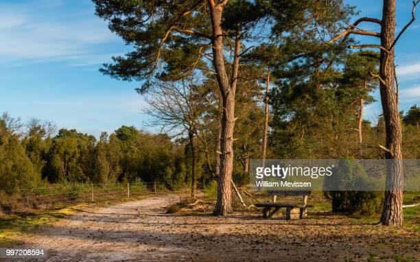 tree bench - william mevissen bildbanksfoton och bilder