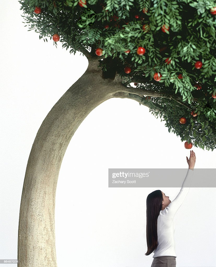 Tree bends over to help a girl pick an apple : Stock Photo