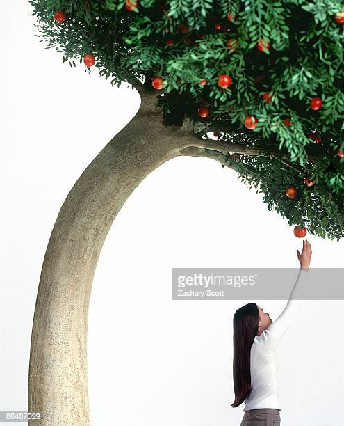 Tree bends over to help a girl pick an apple