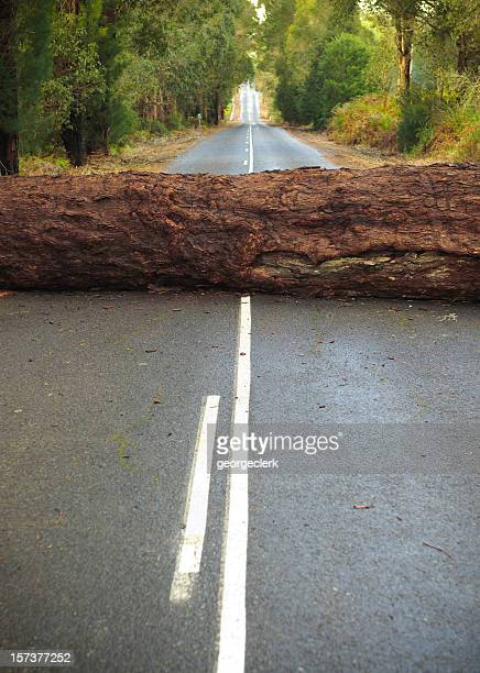 Tree Blocking the Road