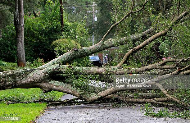 A tree blocks Fernwood Road in Murrells Inlet South Carolina on Saturday August 27 after Hurricane Irene moved through the area and north along the...