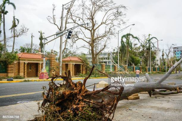 A tree blocks the sidewalk at the University of Puerto Rico Rio Piedras campus after Hurricane Maria at Ponce de Leon Avenue in San Juan Puerto Rico...