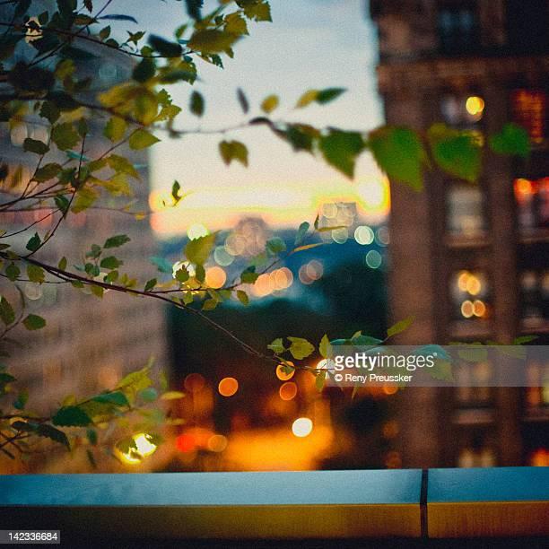 Tree branch and Manhattan flat