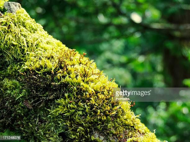 Branche d'arbre avec de la mousse verte