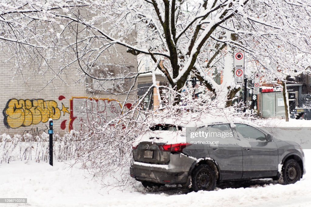 Tree branch fallen over a car in Montreal street after a snowstorm. : Stock Photo