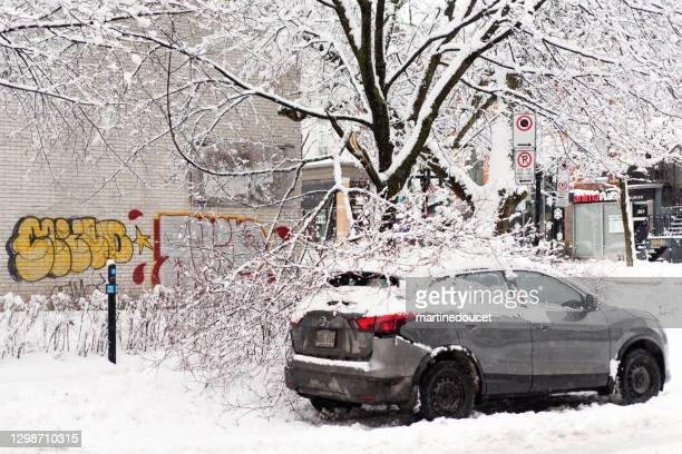 "tree branch fallen over a car in montreal street after a snowstorm. - ""martine doucet"" or martinedoucet stock pictures, royalty-free photos & images"