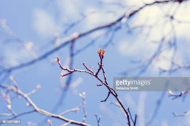 tree branch in spring - march month stock pictures, royalty-free photos & images