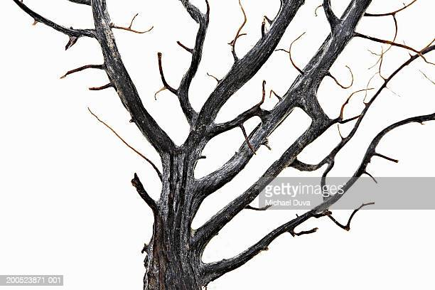 Tree branch on white background