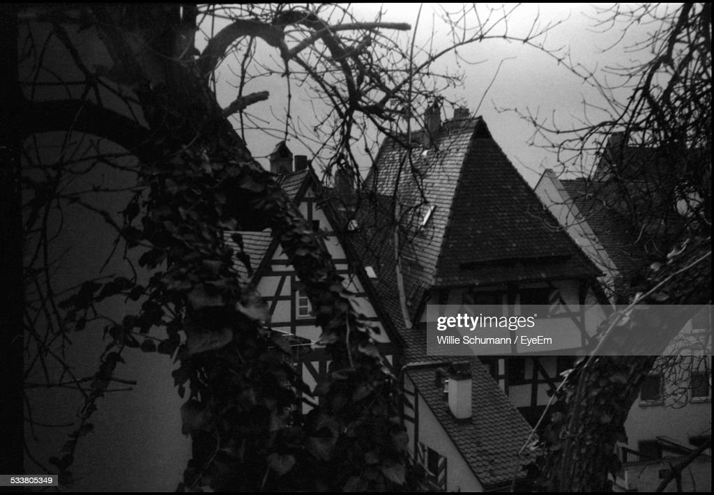 Tree Branches Against Roofs : Foto stock