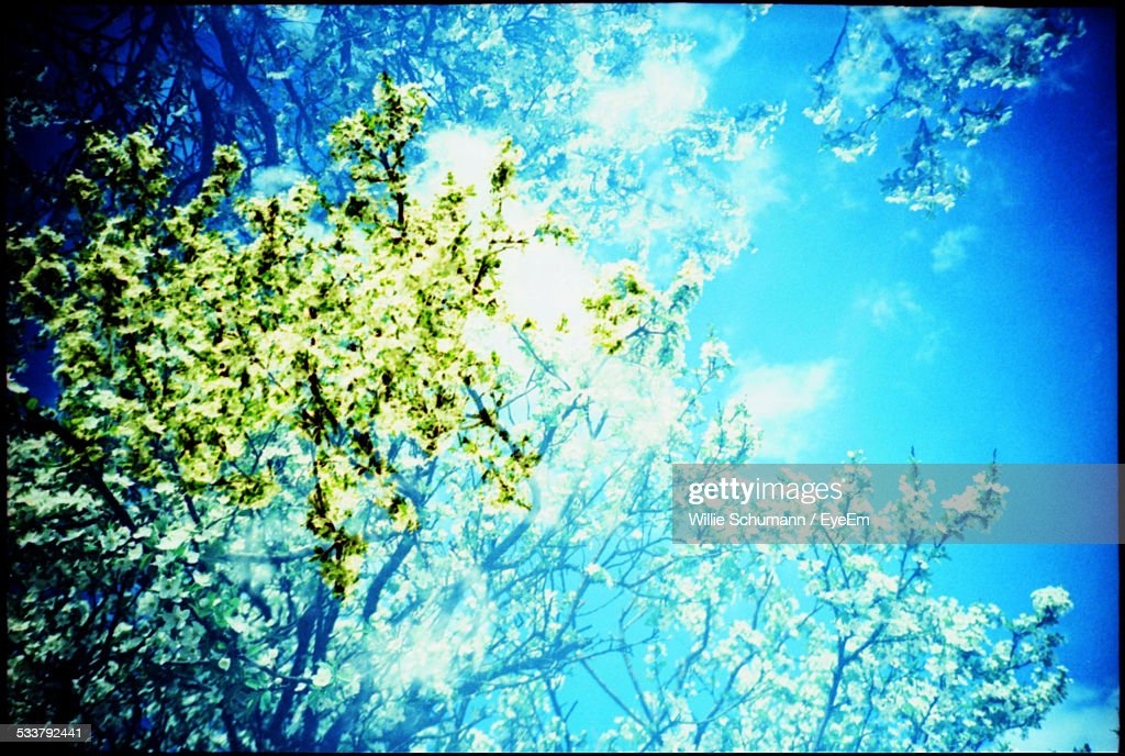 Tree Branches Against Sky : Foto stock