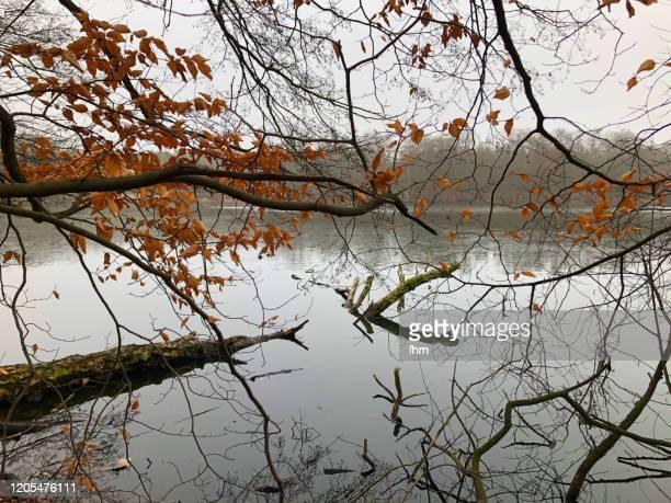 tree branches at the lake - seeufer stock-fotos und bilder