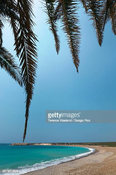 tree branches framing the beach along the coast with blue sky - terence waeland stock pictures, royalty-free photos & images