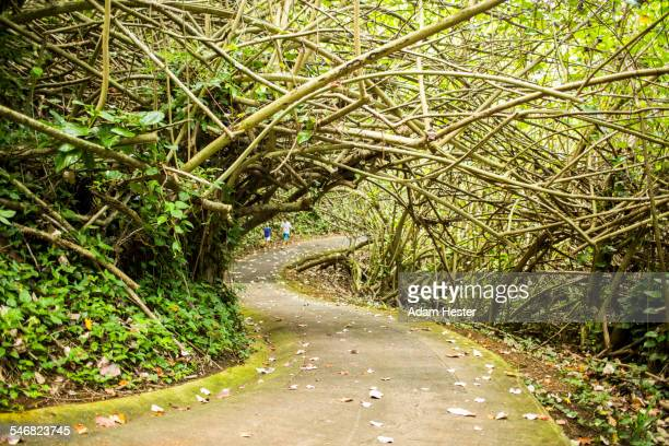 Tree branches over concrete path in forest