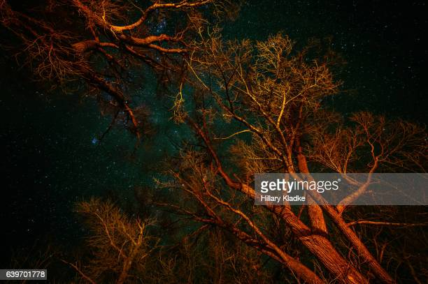 Tree branches painted with red light