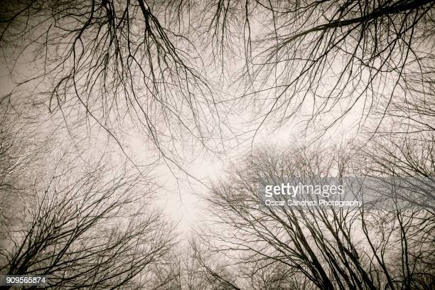 tree branches - spooky stock pictures, royalty-free photos & images