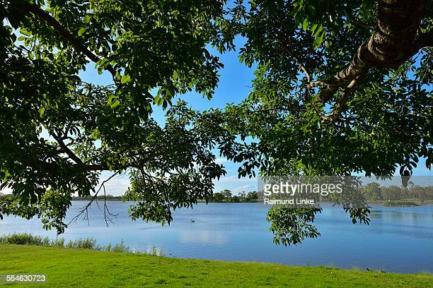 Tree Branches with Lake