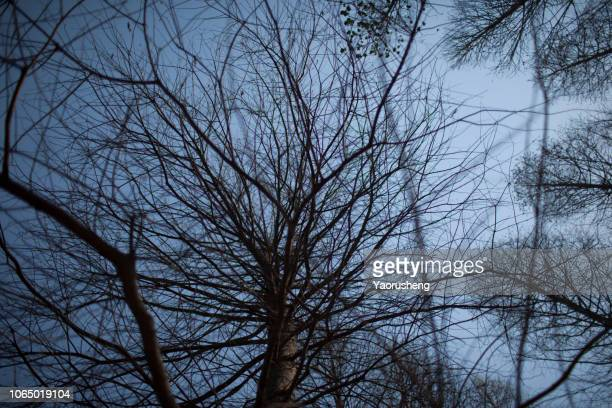 tree brand in winter,blue sky background - monster fictional character stock pictures, royalty-free photos & images