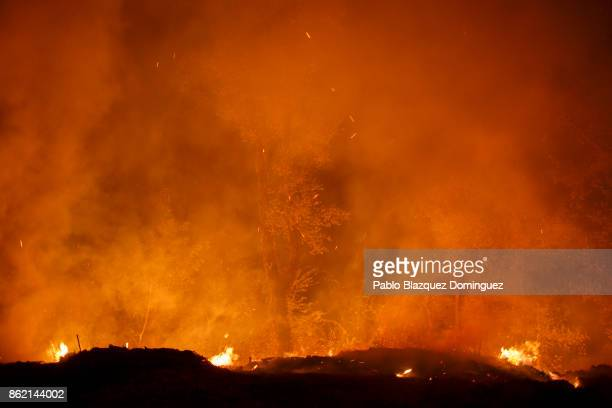 A tree burns during a forest wildfire next to Vilarinho village near Lousa on October 16 2017 in Coimbra region Portugal At least 36 people have died...