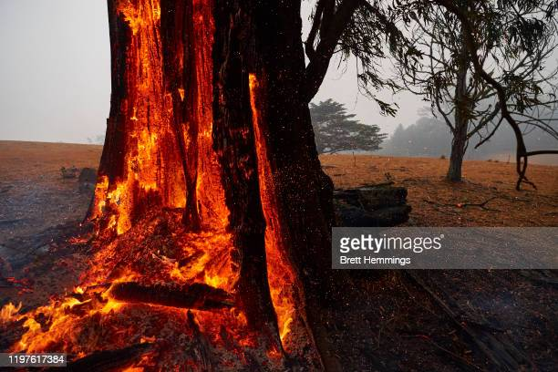 Tree burns from the inside out hours after the fire front had past on January 05, 2020 in Bundanoon, Australia. A state of emergency is in place...