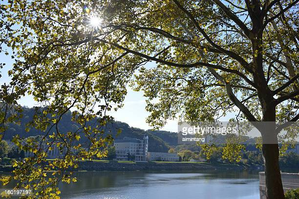tree by kanawha river - charleston west virginia stock photos and pictures