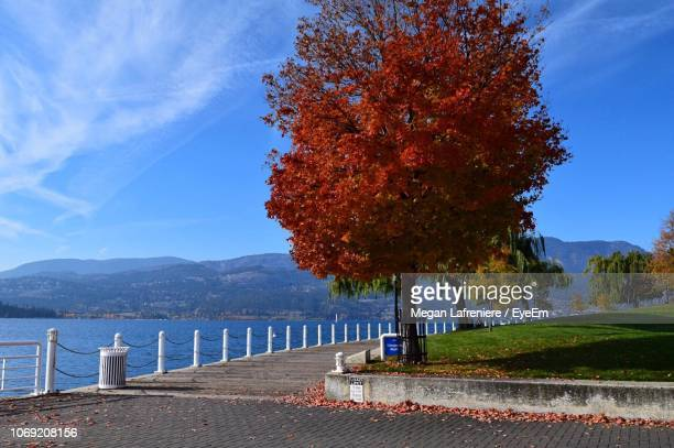 tree by lake against sky during autumn - kelowna stock pictures, royalty-free photos & images
