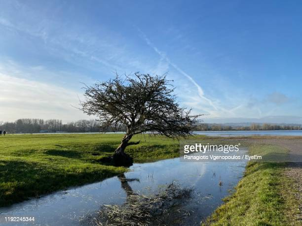 tree by lake against sky - vgenopoulos stock pictures, royalty-free photos & images