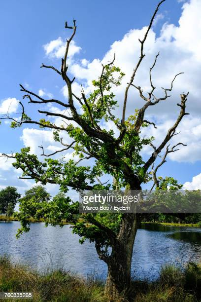 tree by lake against sky - bos stock pictures, royalty-free photos & images