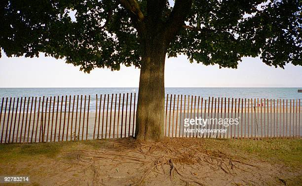 tree by lake michigan - evanston illinois stock photos and pictures