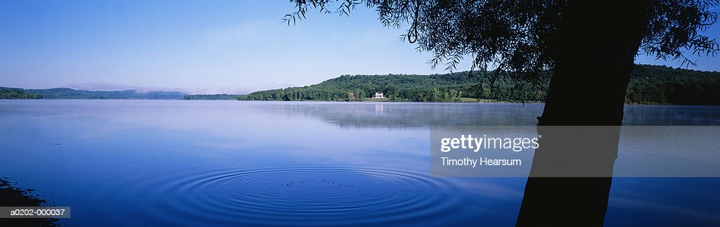 Tree by Lake : Stock Photo