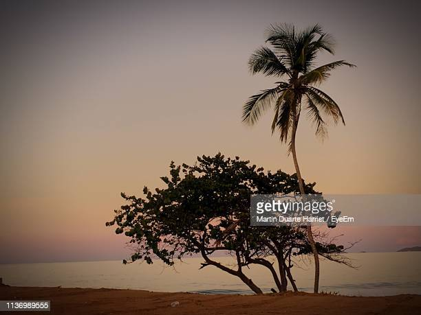 tree by sea against sky at sunset - harriet stock photos and pictures