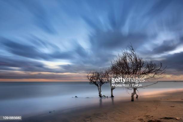 tree by sea against sky during sunset - andrea rizzi fotografías e imágenes de stock