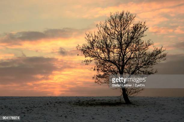 Tree By Sea Against Sky During Sunset