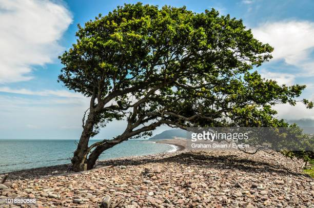 tree by sea against sky - ポーロック ストックフォトと画像
