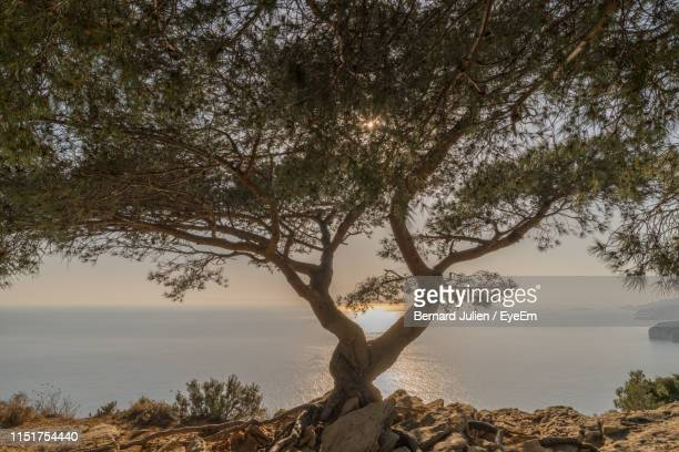 tree by sea against sky - ラシオタ ストックフォトと画像