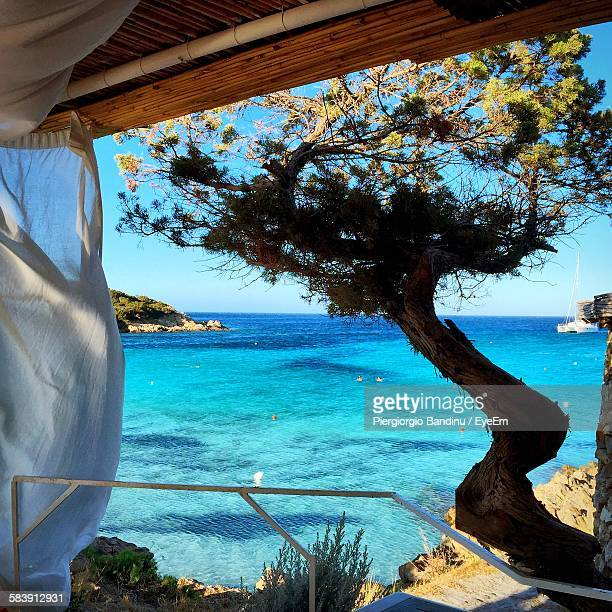 tree by sea against sky seen through balcony - costa smeralda stock pictures, royalty-free photos & images