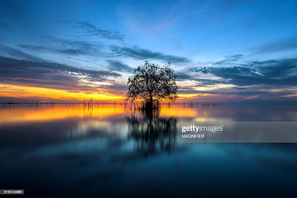 Baum am Meer mit der wunderschönen Morgensonne. : Stock-Foto