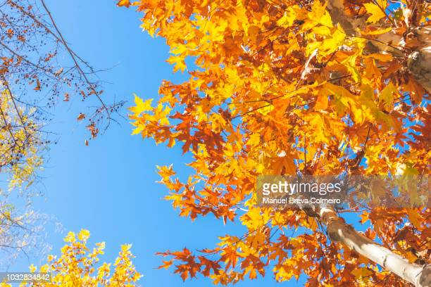 tree canopy in autumn - cross processed stock pictures, royalty-free photos & images