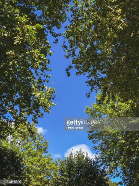 tree canopy - low stock pictures, royalty-free photos & images