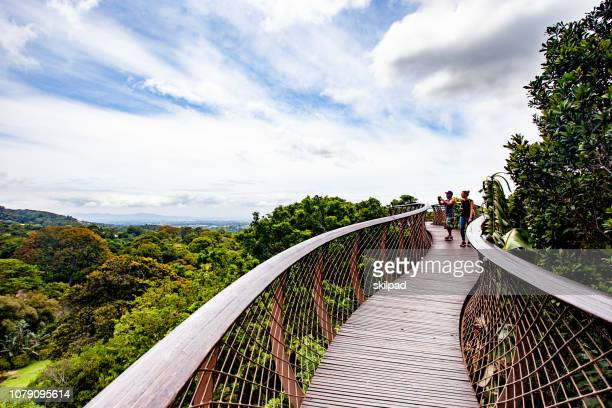 tree canopy walkway in kirstenbosch gardens, cape town, south africa - treetop stock photos and pictures