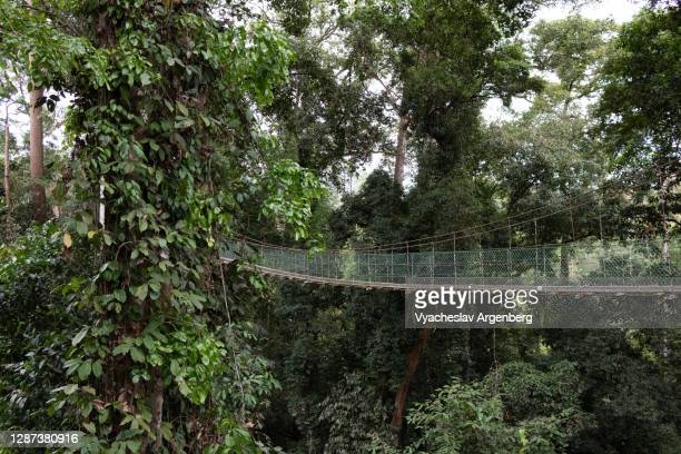 tree canopy walkway, maliau basin, borneo, malaysia - argenberg stock pictures, royalty-free photos & images