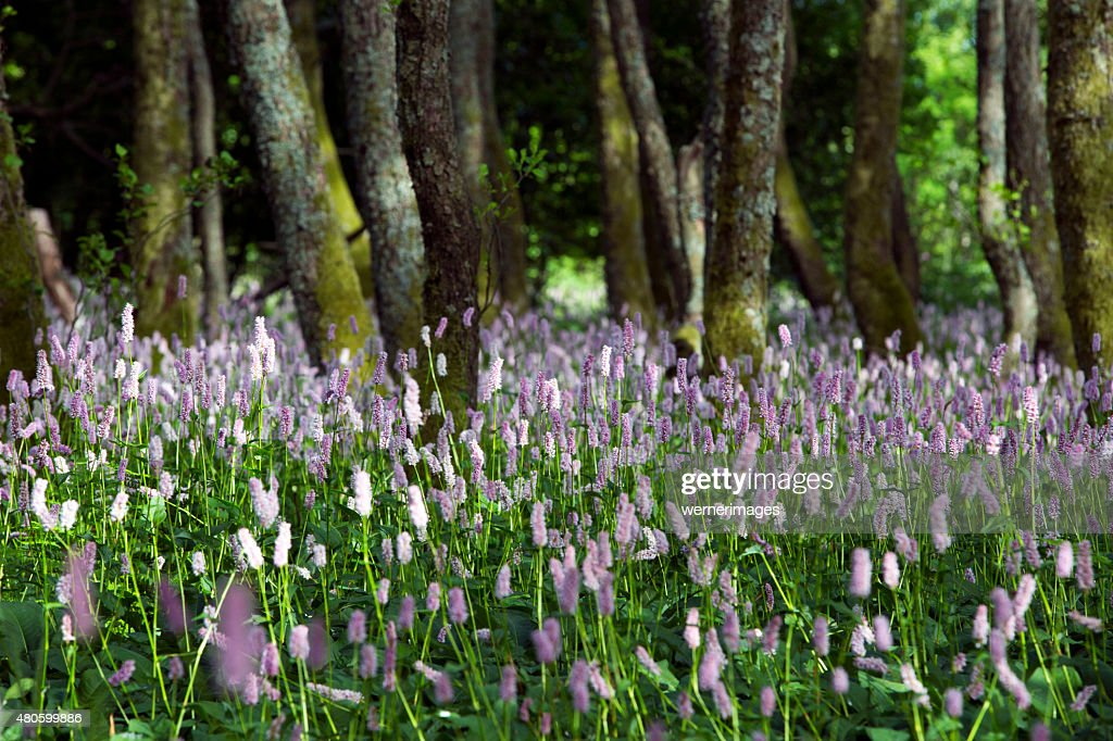 tree clearing with pink flowers : Stock Photo