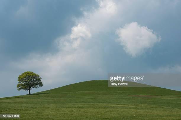 Tree, Cloud