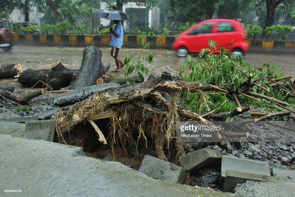 Tree collapsed due to heavy rain at Pokhran road in Thane, on August 19, 2017 in Mumbai, India. These weather conditions have been attributed to the presence of a low pressure which is currently lying over the Vidarbha region. Due to this, moisture incursion has increased over Mumbai as well as Thane and the cities have recorded these heavy spells.
