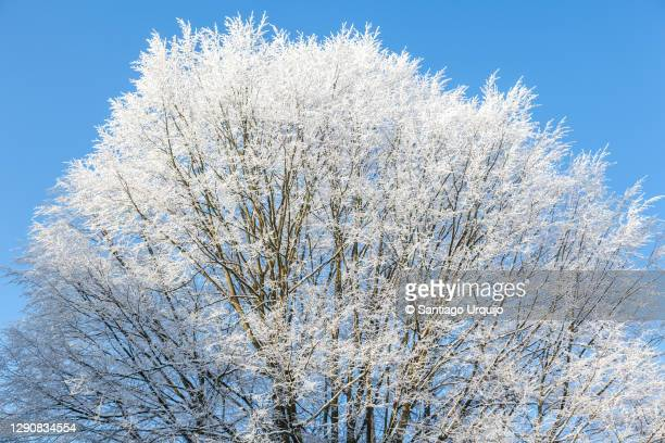 tree covered in frost - capital region stock pictures, royalty-free photos & images