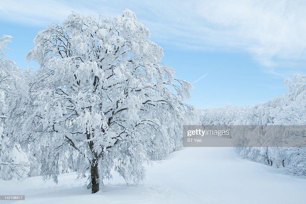 Tree covered in snow : Bildbanksbilder