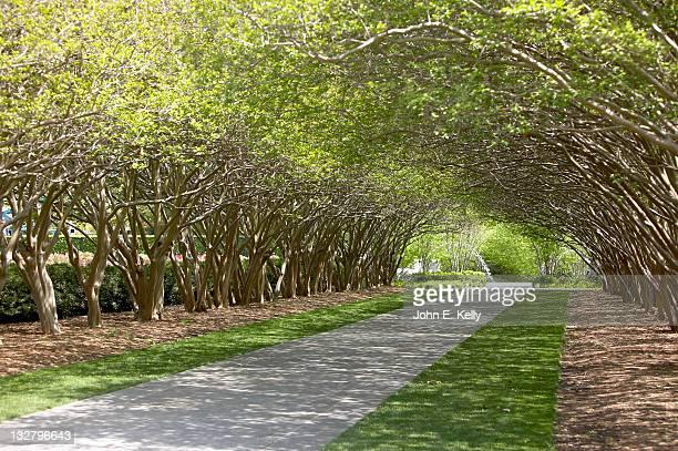 Tree covered walkway, Dallas Arboretum