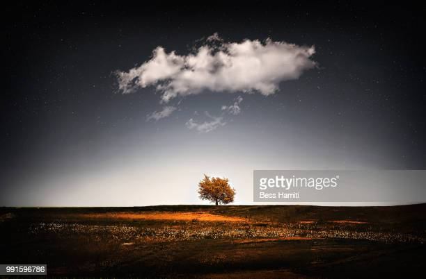 a tree covered with clouds - dawn bess stock pictures, royalty-free photos & images